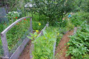 Jardin potager en permaculture au Belchenbach